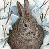 Snow Rabbit Puzzle